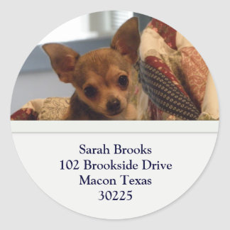 Chihuahua Address Stickers