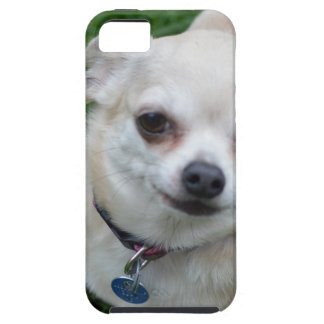 Chihuahua Cover For iPhone 5/5S