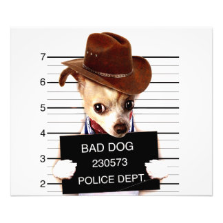 chihuahua cowboy - sheriff dog photo print