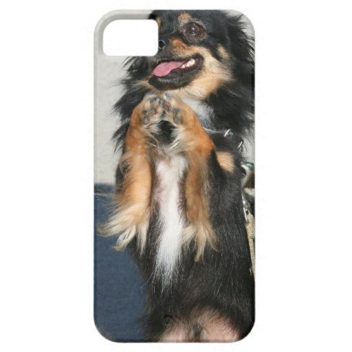 Chihuahua dog iPhone 5 covers
