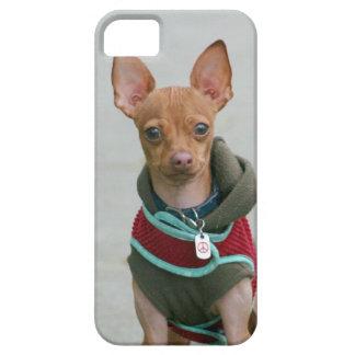 Chihuahua dog iPhone 5 case