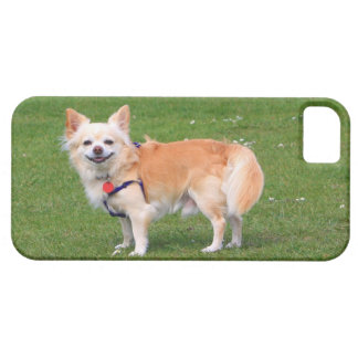 Chihuahua dog long-haired beautiful photo iPhone 5 covers