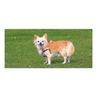 Chihuahua dog long-haired photo custom bookmark rack card
