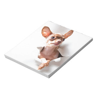 Chihuahua  dog  Tearing Through Notepad