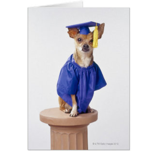Chihuahua dog wearing graduation uniform, studio card