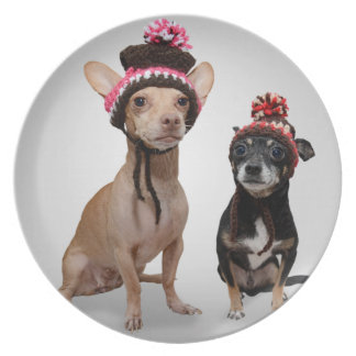 Chihuahua Dogs With Hats Photo Plate