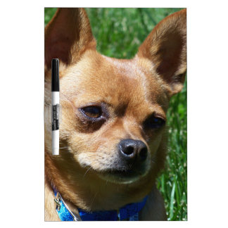 Chihuahua Dry Erase Whiteboards
