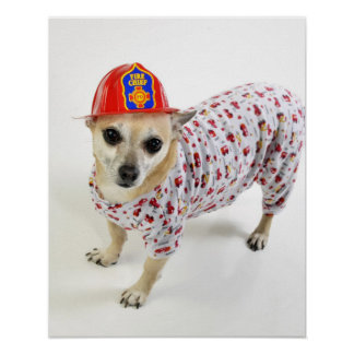 Chihuahua Fireman Design Poster