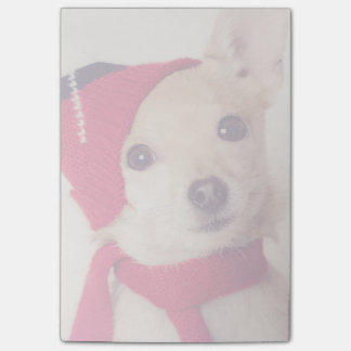 Chihuahua In Winter Cap Post-it Notes