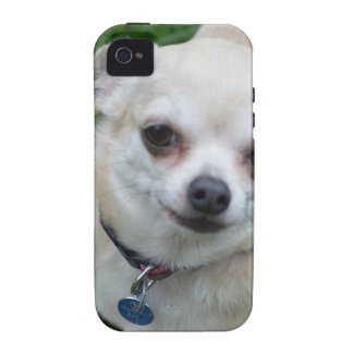Chihuahua iPhone 4 Cases