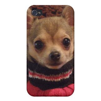 Chihuahua  iPhone 4 covers