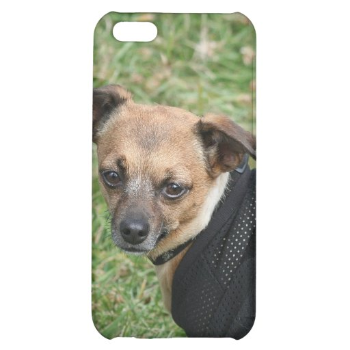 Chihuahua iphone 4 speck case iPhone 5C cover
