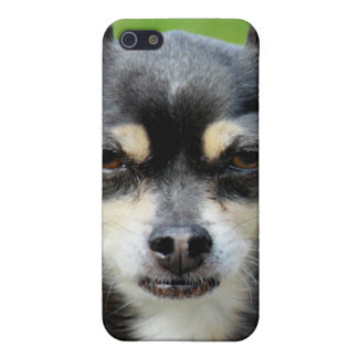 Chihuahua! iPhone 5 Cover