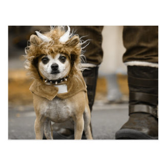 Chihuahua Lion with Horns Postcard