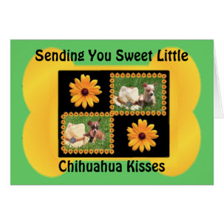 Chihuahua Lover Delight Greeting Cards