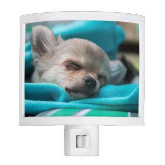 Chihuahua Night Light