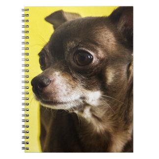 chihuahua notebooks