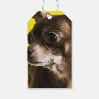 chihuahua pack of gift tags