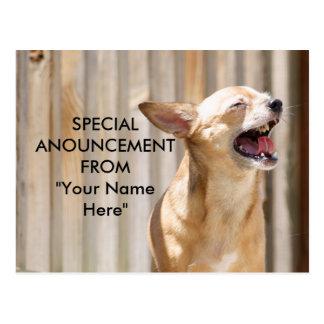 Chihuahua Postcard