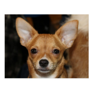 Chihuahua Postcard Cute For Dog Lovers