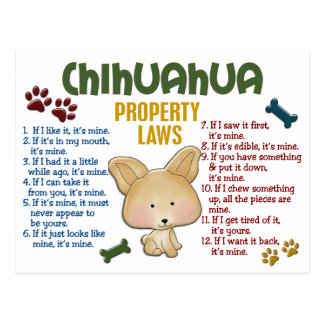 Chihuahua Property Laws 4 Postcard