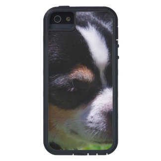 Chihuahua Pup iPhone 5 Cover