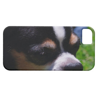 Chihuahua Pup iPhone 5 Case