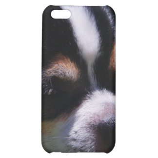 Chihuahua Pup iPhone Case Case For iPhone 5C
