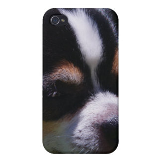 Chihuahua Pup iPhone Case iPhone 4/4S Cases