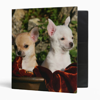 Chihuahua Puppies Vinyl Binder