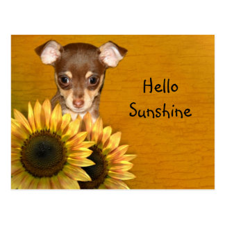 Chihuahua puppy and sunflowers postcard