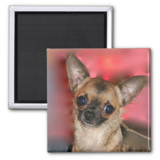 Chihuahua puppy blank magnet
