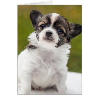 Chihuahua Puppy Card