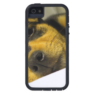 Chihuahua Puppy Cover For iPhone 5