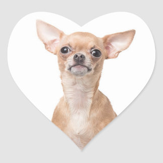 Chihuahua Puppy Dog Heart Heart Sticker