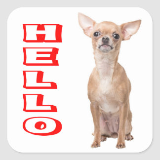 Chihuahua Puppy Dog Red Hello Square Sticker