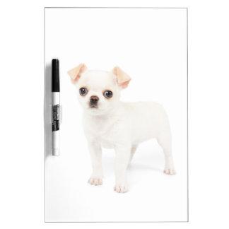 Chihuahua puppy Dry-Erase board