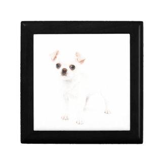 Chihuahua puppy gift boxes