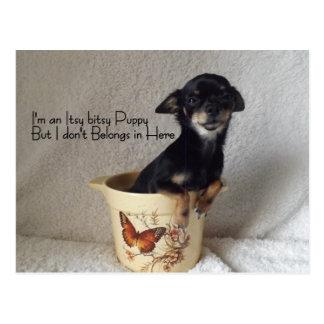 chihuahua Puppy Humor card Postcard