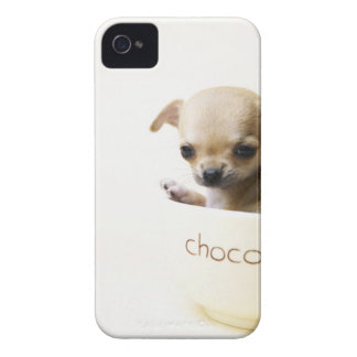 Chihuahua puppy in bowl (cropped) iPhone 4 case