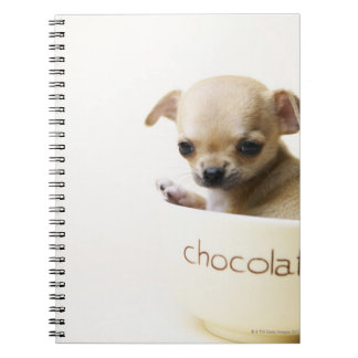 Chihuahua puppy in bowl (cropped) notebook