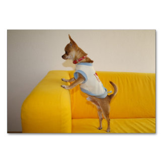 Chihuahua Puppy On Yellow Sofa Table Cards