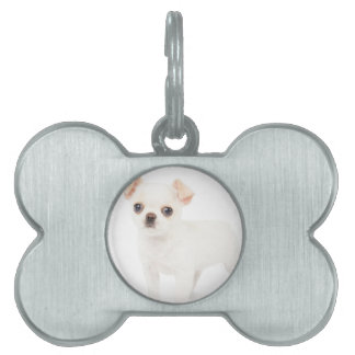 Chihuahua puppy pet ID tag