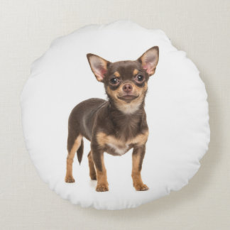 Chihuahua puppy pillow