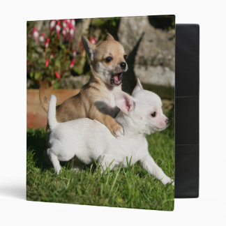 Chihuahua Puppy Playing Vinyl Binder