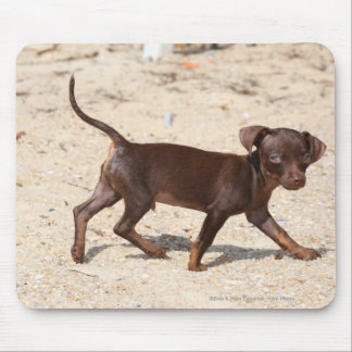 Chihuahua Puppy Walking Mouse Pad