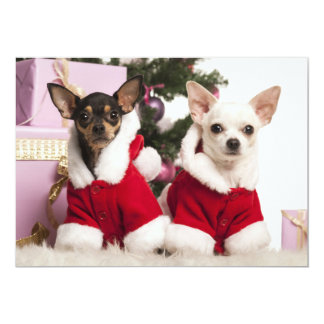 Chihuahua Sitting And Wearing A Christmas Suit Card