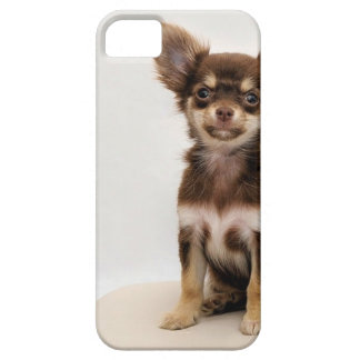Chihuahua Small Dog Case For The iPhone 5