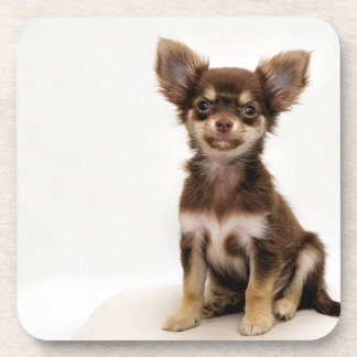 Chihuahua Small Dog Coaster