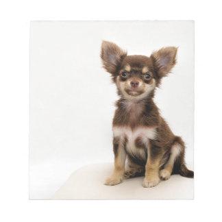 Chihuahua Small Dog Notepad